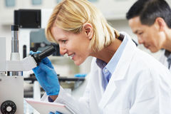 Female Scientist Using Tablet Computer In Laboratory Royalty Free Stock Images
