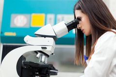 Female scientist at work in a laboratory Stock Image