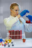 Female scientist works in modern biological lab. Young female scientist works in modern biological lab Royalty Free Stock Photos