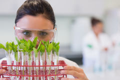 Female scientist with young plants at lab Royalty Free Stock Photography