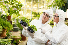 Female scientists in clean suit examining saplings. At greenhouse Royalty Free Stock Image