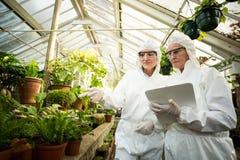 Female scientists examining plants. Female scientists examining potted plants at greenhouse Stock Photo
