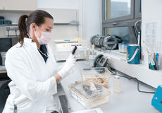 Female scientists handles laboratory mouse Stock Image