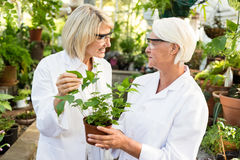 Female scientists holding potted plant Stock Photo