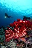 Female scuba diver Royalty Free Stock Photo