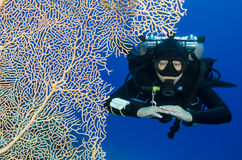 Female scuba diver on twin tanks enjoying a tech dive Stock Images