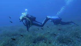 Female Scuba Divers stock video footage