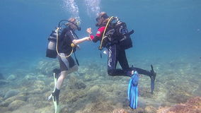 Female Scuba Divers stock video footage