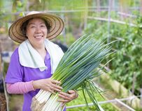 Female Senior farmer with vegetables royalty free stock images
