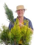 Female senior gardener with thuja trees royalty free stock photo