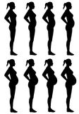 Female Silhouette Stages of Pregnancy Royalty Free Stock Image