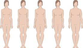 Female silhouette. Vector illustration of women's figure. Different body types Royalty Free Stock Images
