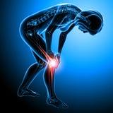 Female skeleton with knee pain Stock Photos