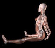 Female Skeleton in Yoga Position Stock Images