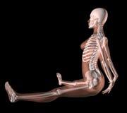 Female Skeleton in Yoga Position royalty free illustration