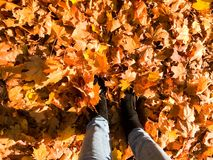 Female slender legs in jeans and boots, shoes a background of yellow, dry, fallen autumn foliage. Multi-colored natural leaves. stock photo