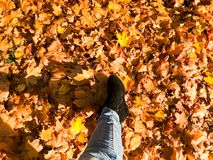 Female slender legs in jeans and boots, shoes a background of yellow, dry, fallen autumn foliage. Multi-colored natural leaves. royalty free stock photos