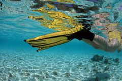 Female snorkeler. Diving in beautiful blue lagoon Stock Images