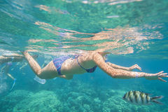 Female snorkeling in tropical coral sea Royalty Free Stock Photography