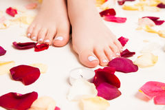 Female soft feet in rose petals Stock Photos