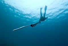 Female Spear-fisher Dives Towards Viewer Stock Photography