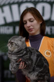 Female steward with a cat during World Cat Show Stock Image