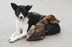 Female stray dog with her kid Stock Photos