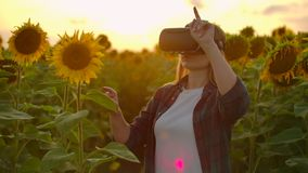 The female student is working in VR glasses on the sunflower field stock video footage