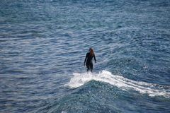 Female Surfer Surfing A Wave. A female surfer in a wetsuit surfing a wave in Australia Royalty Free Stock Images