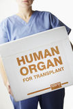 Female surgeon carrying transplant organ box Royalty Free Stock Photos