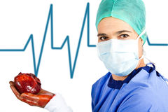 Female surgeon with heart. About to be transplanted stock image