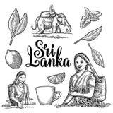 Female tea pickers harvesting leaves, rider on elephant, lemon, cup. Royalty Free Stock Images