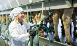 Female technician working with milking machines. Cheerful female technician working with milking machines in cows barn Stock Photos