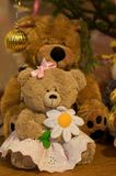 Female Teddy Bear. Stuffed brown teddy bear toy in the skirt holding camomile in its paws Stock Photo