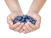 Female teen hands holding ripe blueberries Stock Images