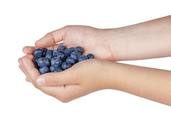 Female teen hands holding ripe blueberries Royalty Free Stock Photo