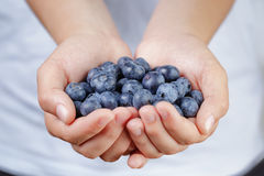 Female teen hands holding ripe blueberries Stock Image