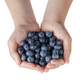 Female teen hands holding washed blueberries stock image