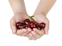 Female teen hands holds cherries Royalty Free Stock Image