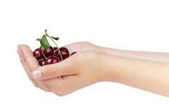 Female teen hands holds cherries Stock Images