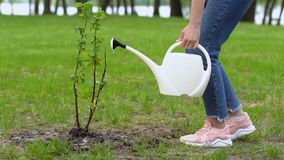 Female teen volunteer watering tree sapling with can, nature care, ecology. Stock footage stock video footage