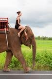 Female teenager rides elephant stock images