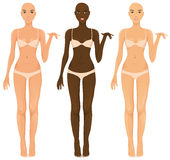 Female torsos Royalty Free Stock Image