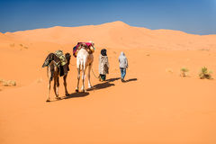 Free Female Tourist And Nomadic Berber Leading 2 Camels Through Desert Royalty Free Stock Photos - 63395908