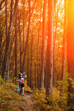 Female tourist and bicycle enjoying wood view from path royalty free stock images