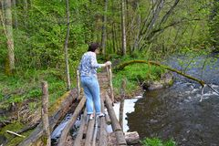 The female tourist carefully goes on the wooden bridge through the river Red. Kaliningrad region.  stock photography