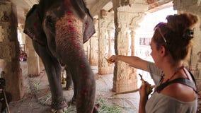 Female tourist feeding elephant stock video footage