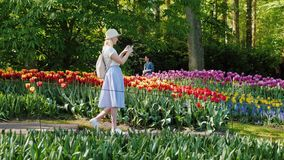 A female tourist walks along the Keukenhof park, taking pictures on the go. Tourism in the Netherlands and Europe. Concept. 4K video stock video footage