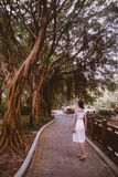Female tourist in a white dress walking under green tropical banyan trees in a park in Hong Kong royalty free stock photos