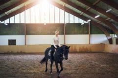 Female trotting on dark horse in paddock Royalty Free Stock Photo